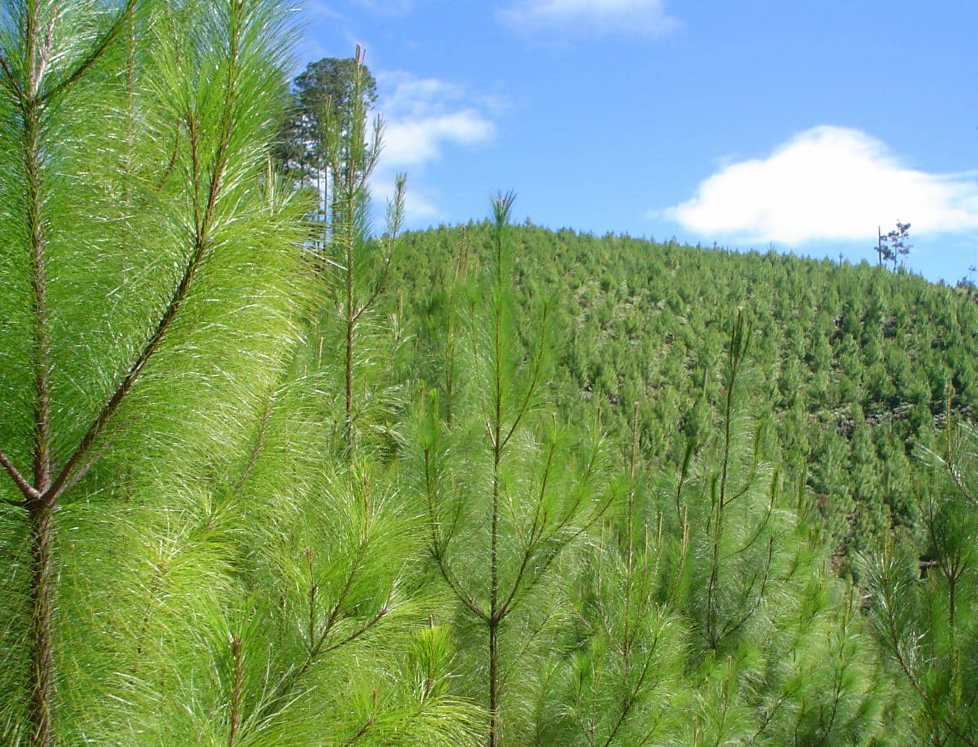 Mesa Forestal: este viernes se concretaría el último trámite para una nueva Ley Forestal