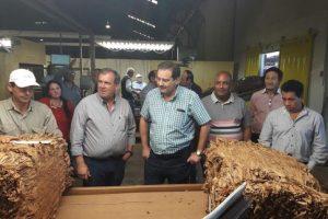 Garay destacó la buena calidad del tabaco que se está acopiando en Misiones