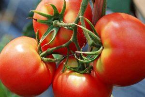 En plena cosecha, productores de economías regionales apenas cubren la mitad de sus costos