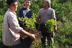 Sin químicos y con riego natural: los salesianos, tras la huella agrícola de jesuitas y guaraníes