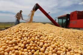 Una buena: Para «castigar» a EE.UU., China comprará harina de soja a la Argentina