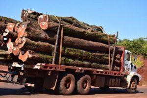 Poco dinamismo en las exportaciones forestales y de tabaco en el primer trimestre