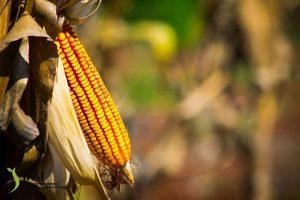 El impulso a los monocultivos «implicará un camino concentrador de tierra y menos productores»