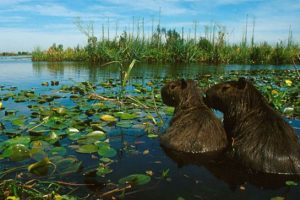 Senado aprobó la creación del Parque Nacional Iberá