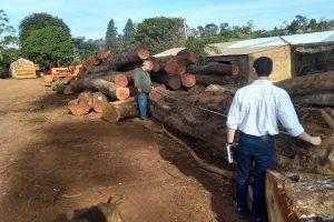 El nuevo equipo de Control Forestal fiscalizó chacras y aserraderos en San Vicente
