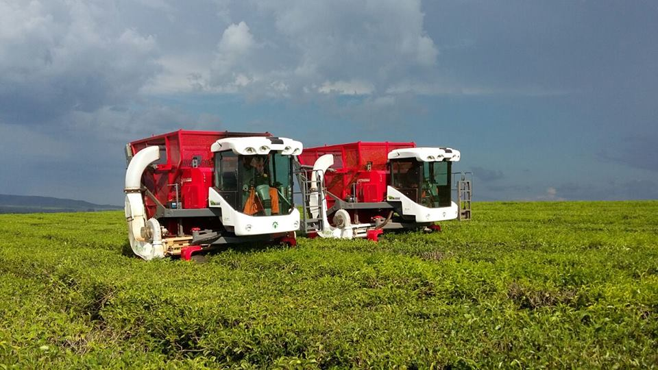 Empresa obereña muestra los beneficios de su cosechadora de té de última generación