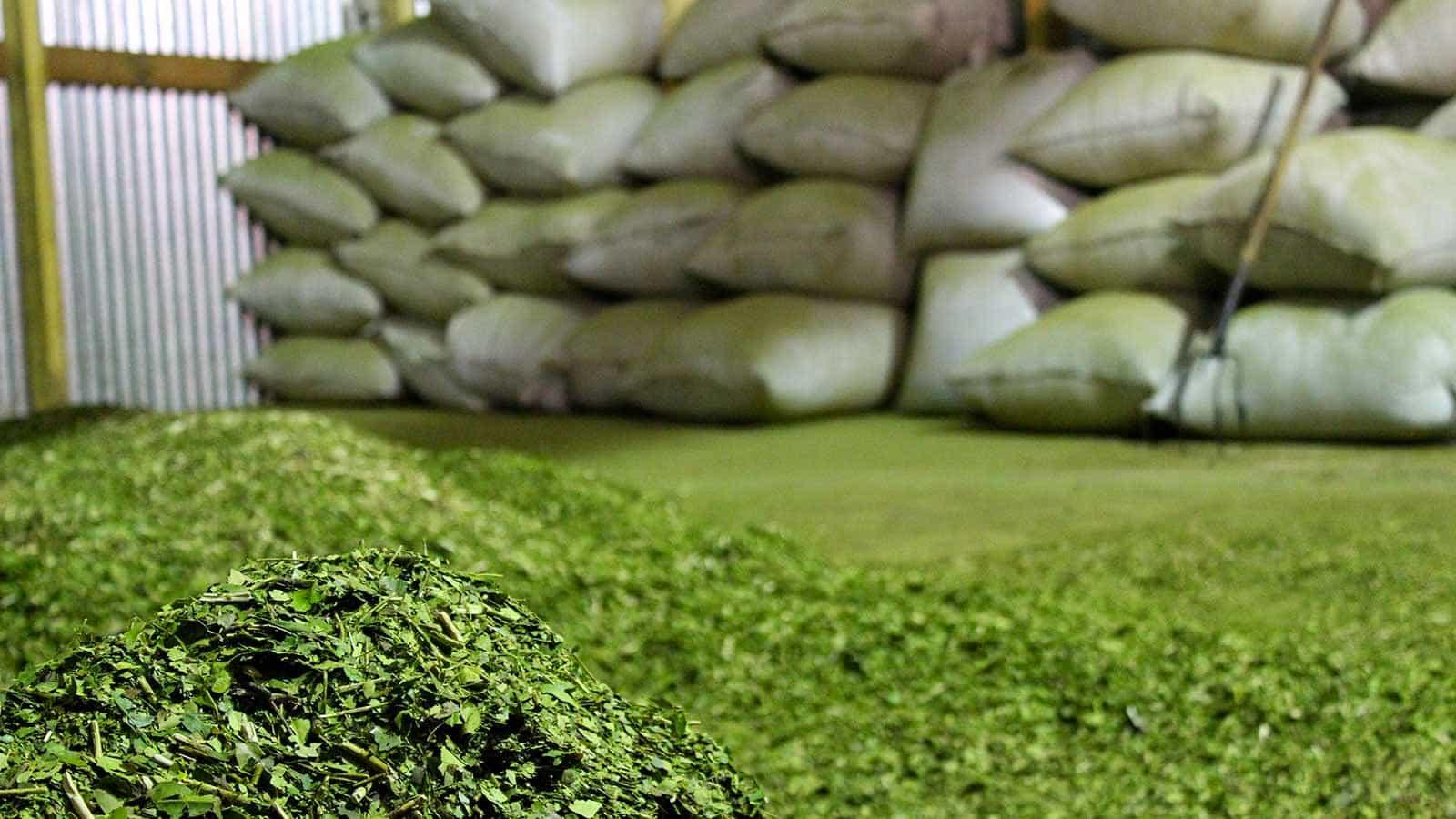 La yerba y el tabaco entre las economías regionales que perdieron competitividad, según Coninagro
