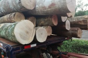 Detuvieron un camión con madera nativa sin guía para el transporte