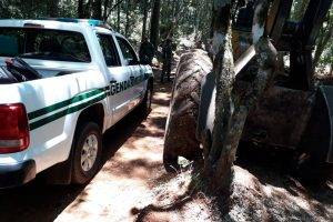 Ecología y Gendarmería frenan desmontes en varios puntos de la provincia