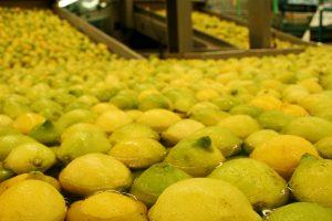 Hasta el 14 de diciembre esta abierta la inscripción on line para exportadores de fruta fresca cítrica