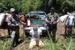 Ecología detuvo a cazador furtivo y decomisó caballos
