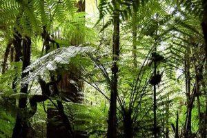 Invitan a votar para que la «Selva Misionera» sea una maravilla natural argentina