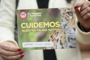 Selva Misionera: morada del yaguareté