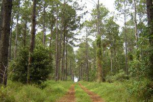 ¿Cuánta agua consumen los bosques implantados en Misiones?