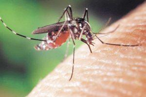 Confirman que ingresó un nuevo serotipo de dengue a Misiones