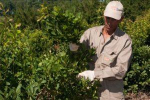 Cada vez son más las empresas que pagan por el agua en Misiones: ahora se sumó Rosamonte
