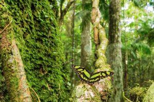 Selva Maravilla ¿Qué puede replicar Misiones del modelo Costa Rica?
