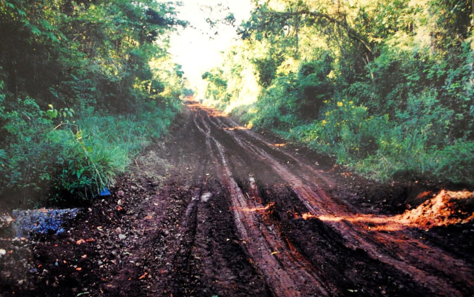 Alerta ambiental: Bolsonaro quiere reabrir la «estrada del Colono» en el parque nacional Iguaçú