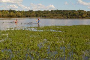 Hallan residuos de medicamentos en dorados, sábalos y bogas del río Uruguay