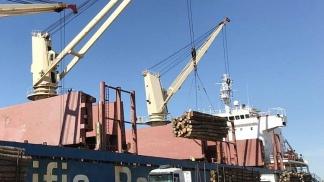 Zarpó a China la primera exportación de madera de eucalipto argentino