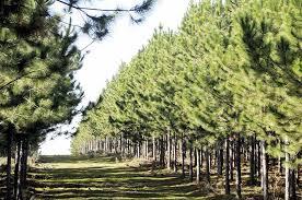 En Eldorado se realizarán las Jornadas Técnicas Forestales y Ambientales
