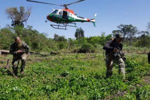Narcotráfico: Paraguay y Argentina anulan más de 300 toneladas de marihuana en Itapúa
