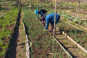 La Ley de Soberanía Alimentaria promueve un modelo de desarrollo sustentable