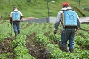 Investigación encuentra indicios de daño genético por exposición a agroquímicos