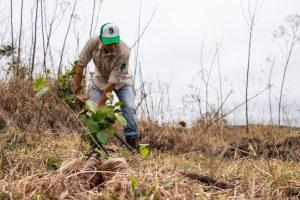 Vida Silvestre celebró los 10 años de trabajo reforestando la selva misionera con más de 5.000 árboles nativos nuevos plantados en 3 días