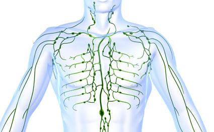 Linfoma: un cáncer que se desarrolla en las células del sistema linfático