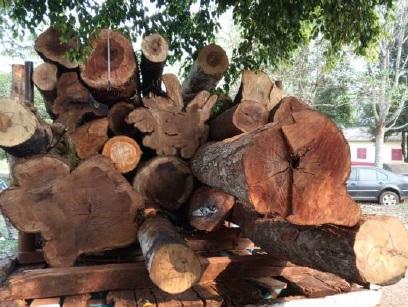 Retienen un camión con madera nativa en Garuhapé