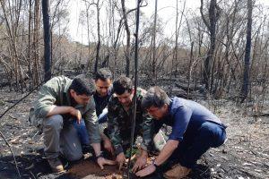 Plantaron mil árboles nativos en área incendiada de Puerto Iguazú