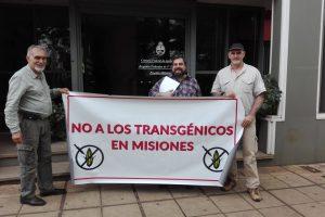 Kaapuera presentó una demanda judicial para frenar el maíz transgénico en Misiones