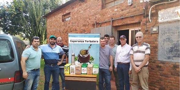 «Orembae»: la yerba aristobuleña que ingresó al programa «Compre Público»