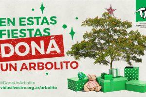 En esta Navidad, Vida Silvestre propone regalar un árbol a la selva misionera