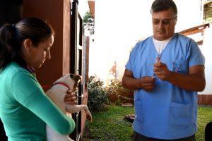 El IMuSA realizó más de 13.000 castraciones y aplicó 14.000 vacunas antirrábicas este año