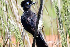 Paseo gratuito con observación de aves en la Reserva Itá