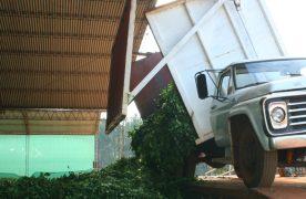 Discrepancia entre productores, cooperativistas y molineros por el precio de la yerba para la cosecha de invierno