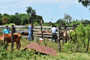 Actúan rápidamente ante focos de rabia en la zona sur de Misiones