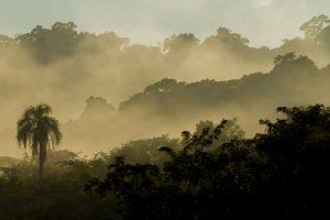 Misiones concretó el corredor biológico entre los parques Foerster y Uruguaí