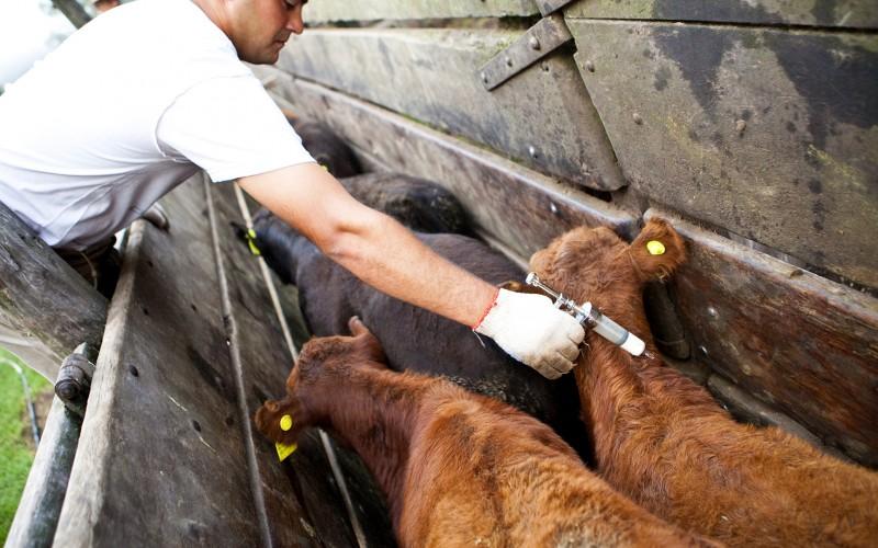 La COPROSA estableció el 6 de abril la fecha de inicio de la Primera Campaña de Vacunación Antiaftosa 2020