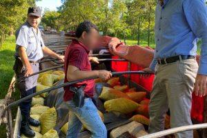 Nuevo golpe al narcotráfico: la Policía de Misiones interceptó un camión repleto de droga