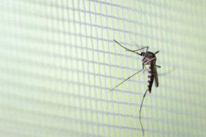 Brasil: confirman 12 nuevas muertes por dengue en una semana en el estado de Paraná