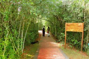 Cierran un sendero del Parque Nacional Iguazú por la aparición de un puma