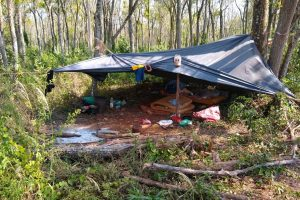 El Ministerio de Trabajo y Empleo detectó trabajo infantil y un campamento en un yerbal de Wanda